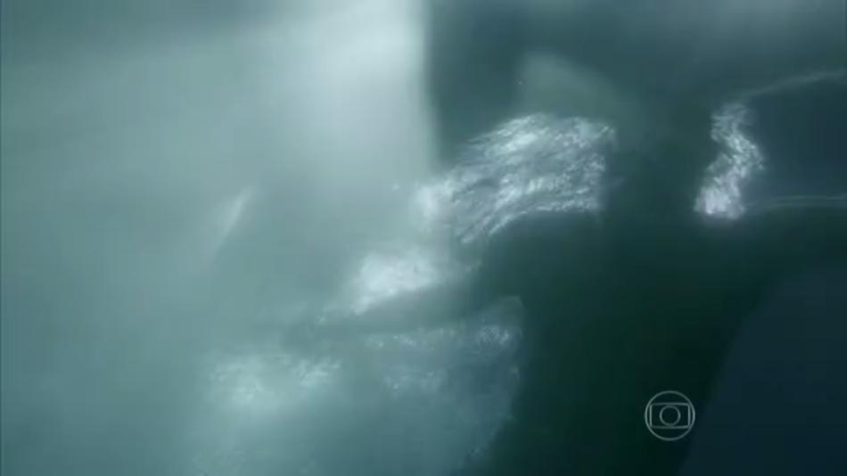 Rede Sarah nadando Ivan